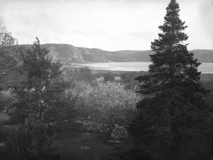 """Enligt fotografens noteringar: """"Från Saltkällans trädgård, taget då Patron Ullman flyttade troligen 1912."""""""