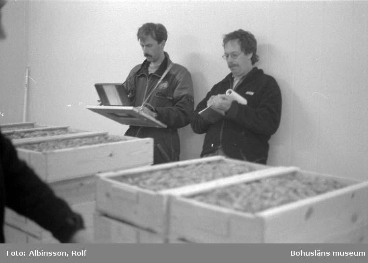 """Enligt fotografens noteringar: """"Fiskeauktionspersonal. Till vänster Anders Samuelsson som skriver och till höger Mats Henriksson, auktionsutropare.""""  Fototid: 1996-04-03."""