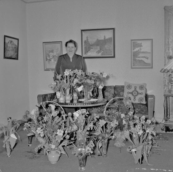 """Text till bilden: """"Fru Niklasson, Bergavägen 10. 50 år. 1955.02.25""""         i"""