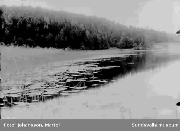 Näckrosor vi sjön Vikarn.