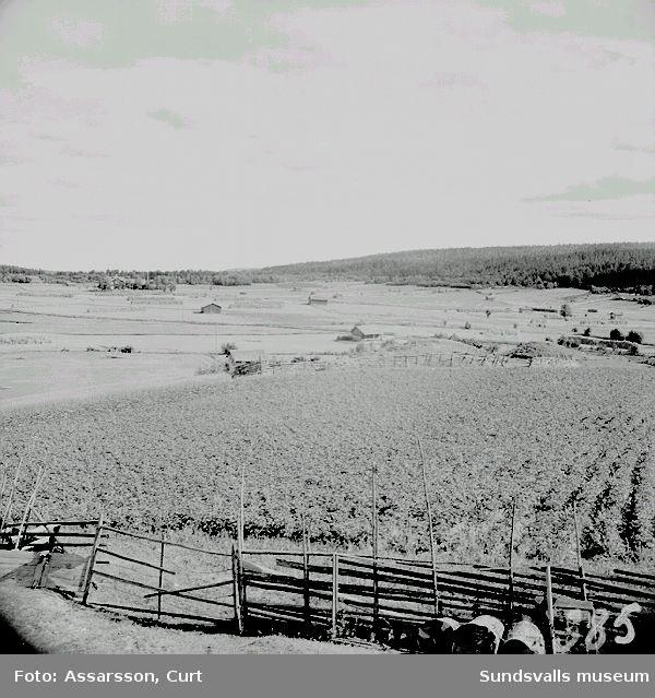 Jordbruksbygd i Häljom, Njurunda, forngravar tv. på bilden.