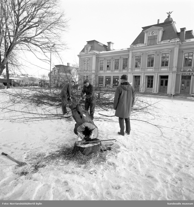 En serie bilder tagna i samband med fällning av popplarna i Järnvägsparken invid Strandgatan, området som sedan gav plats för E4 genom Sundsvall. Bakom syns gamla järnvägsstationen, numera (2016) Casino Cosmopol. På en av bilderna syns även järnvägstunneln som då gick snett under Köpmangatan.