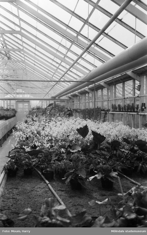 Kommunens växthus vid Gamla Riksvägen i Rävekärr, Mölndal, år 1983.  För mer information om bilden se under tilläggsinformation.