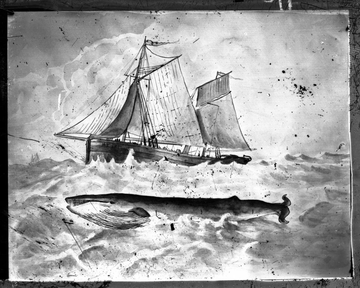 '1 val simmar invid 1 båt ::  :: Ingår i serie med fotonr. 5202:11-18. Se även hela fotonr. 5202-5218 med bilder från Frits Johansen.'