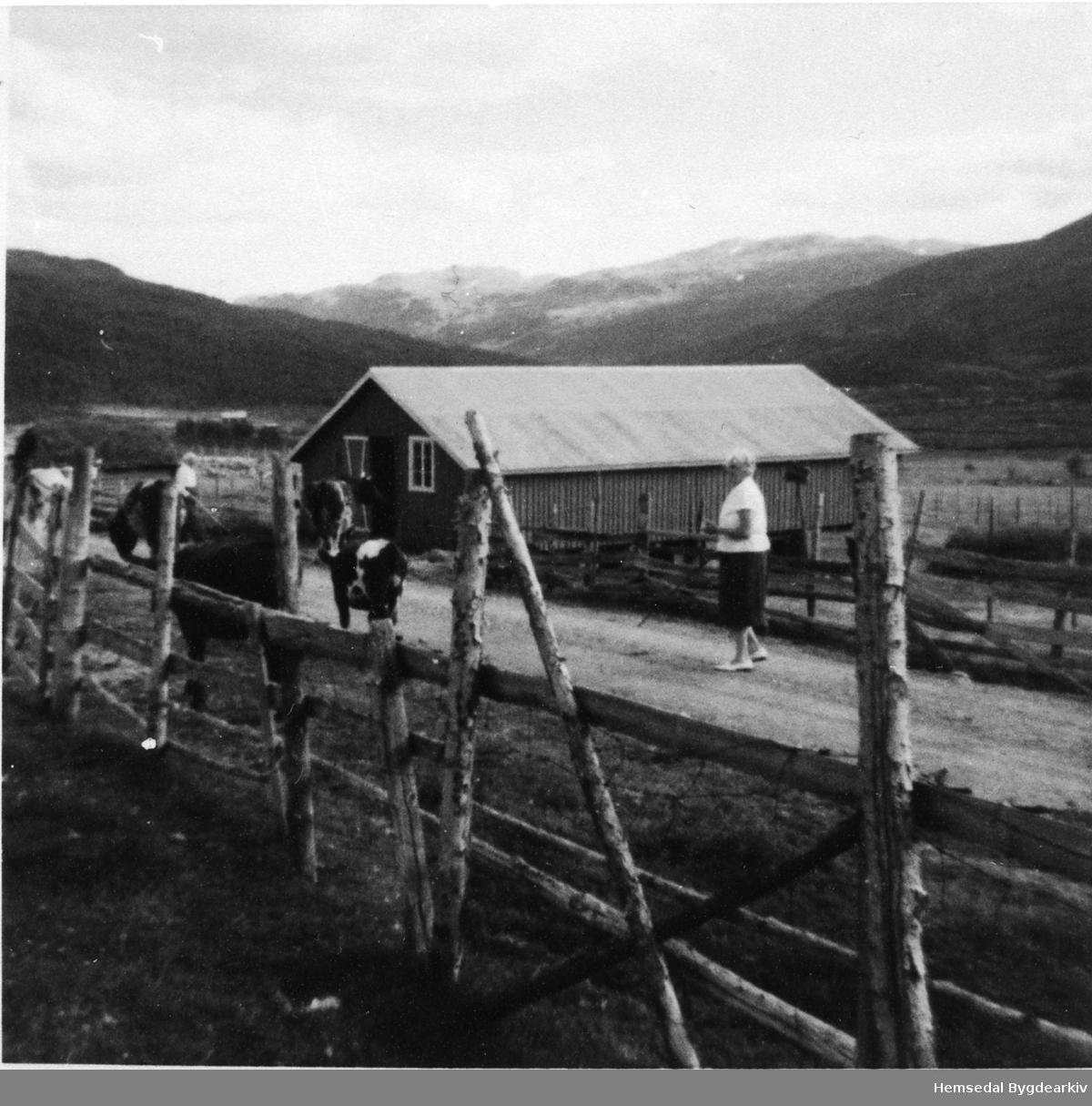 Fjøset til Kyrkjebøen, 69.1, på stølen i Mørekvam i Hemsedal, ca. 1963.