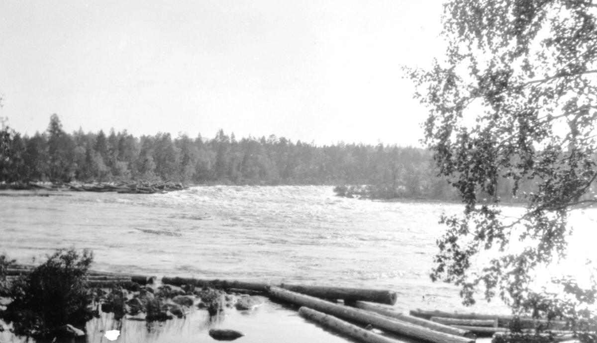 """""""Nedenfor Kobbfoss i Pasvig.""""  Vi ser Pasvikelva med skogen i bakgrunnen. I forgrunnen ligger noen tømmerstokker på elva."""
