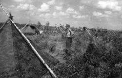 Nyborgmoen sommeren 1941, sol og vind over leiren. Soldatene