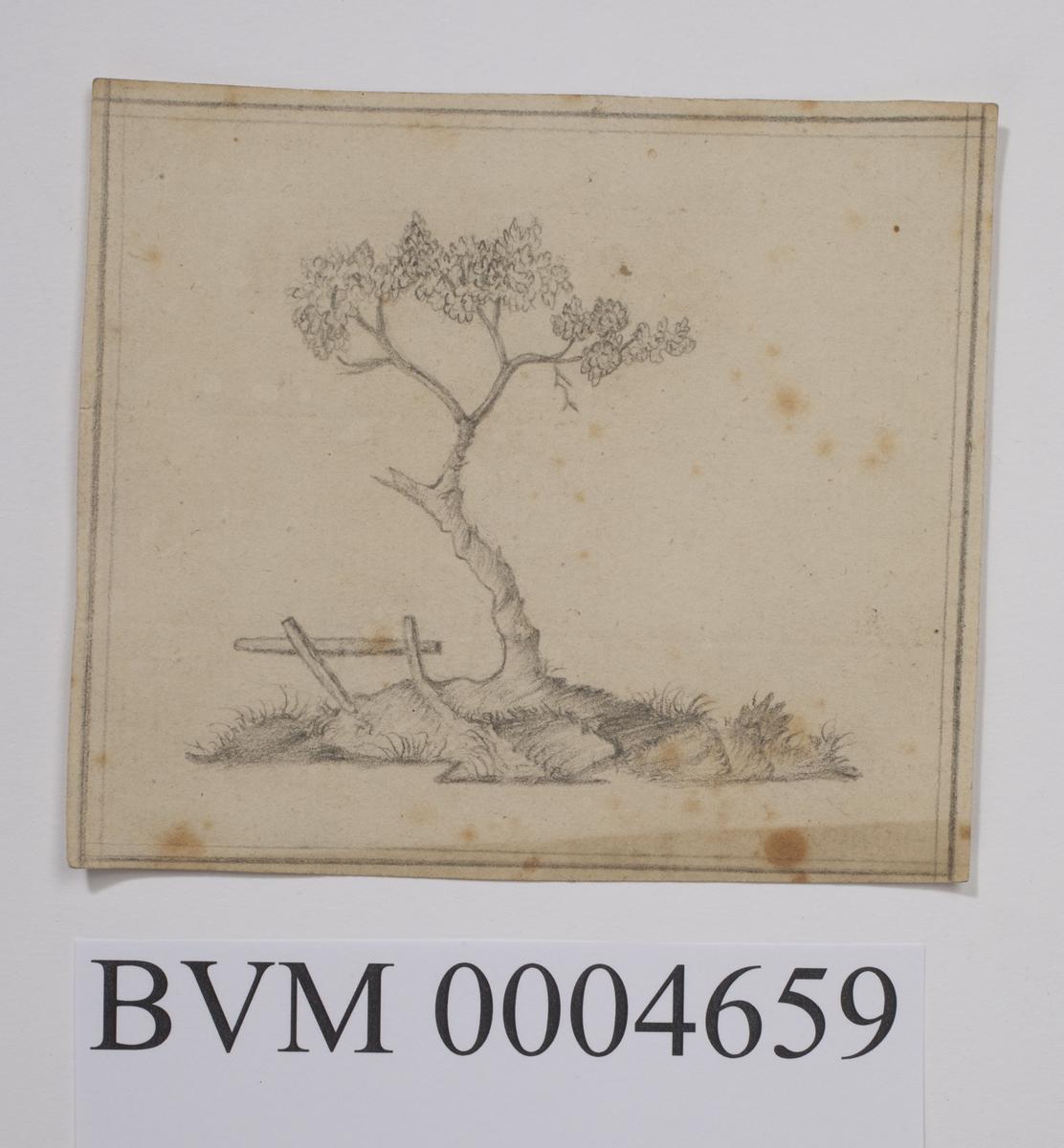 Blyanttegning av landskap med tre.