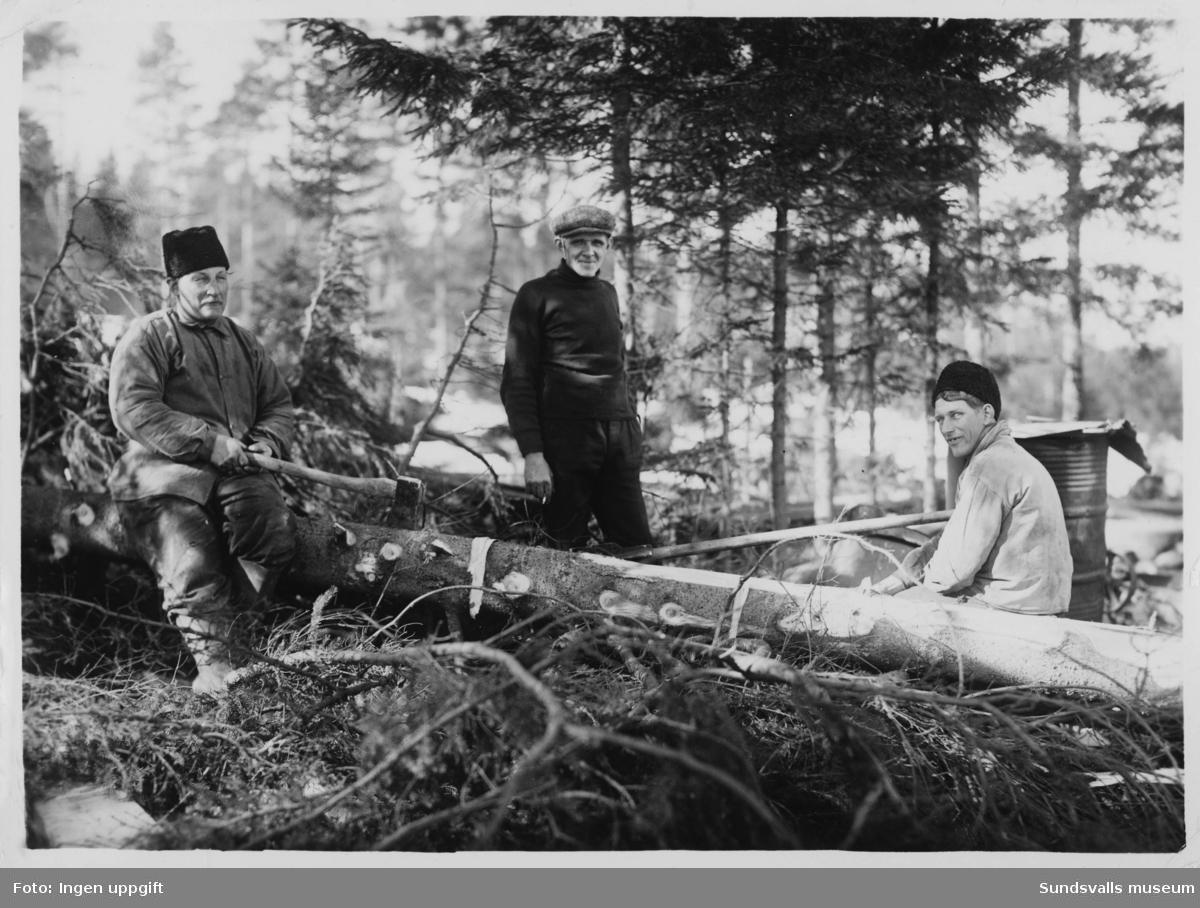 Skogsarbete, kvistning. I mitten Torsten Bertlin (f. 1910 d. 1995). Troligen Borgsjö.