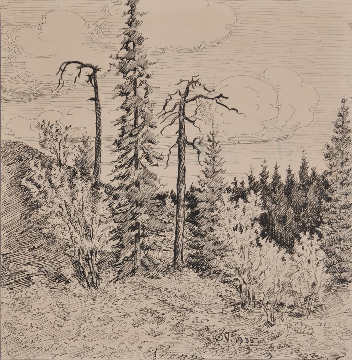 Skoglandskap med tørrfuruer.