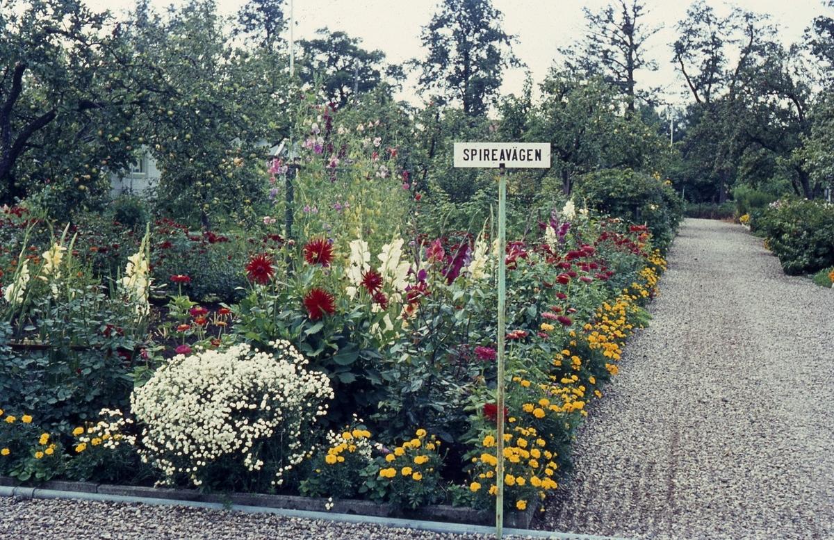 Grusgångar mellan koloniträdgårdarpå S.J koloniområde.
