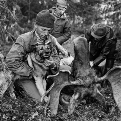 Elgjegere og elghund under elgjakta i 1966.