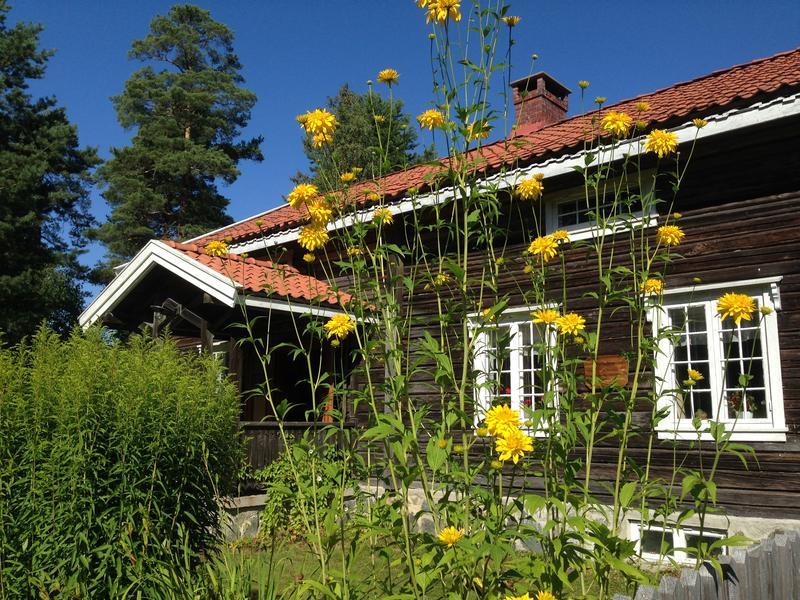 Blomstene foran Storbråtenhuset - liggende. Foto/Photo