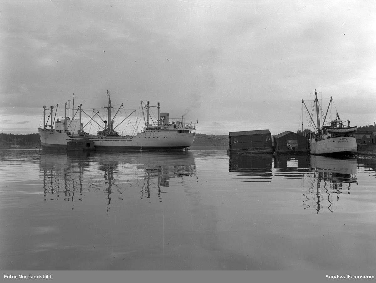 Fartygen Aquila lastar trävaror i Skönvik.