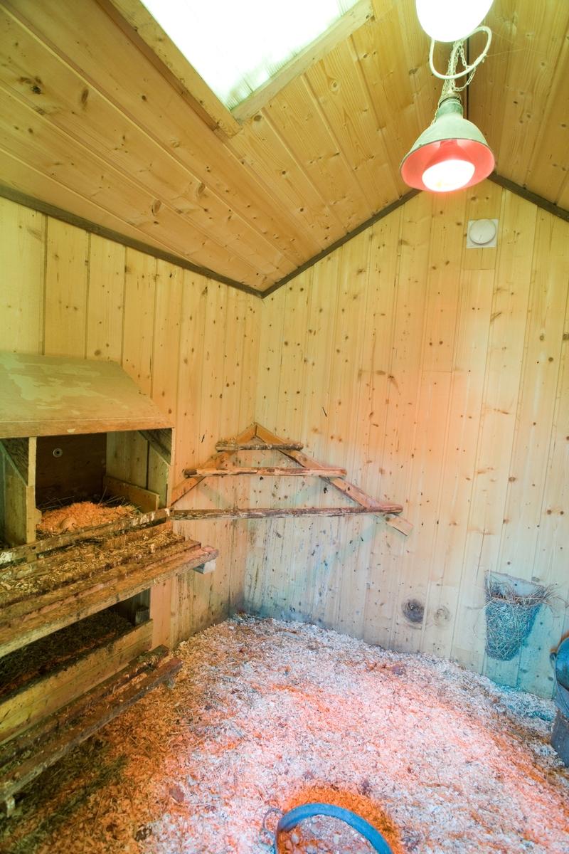 Varmelampe i hønsehus
