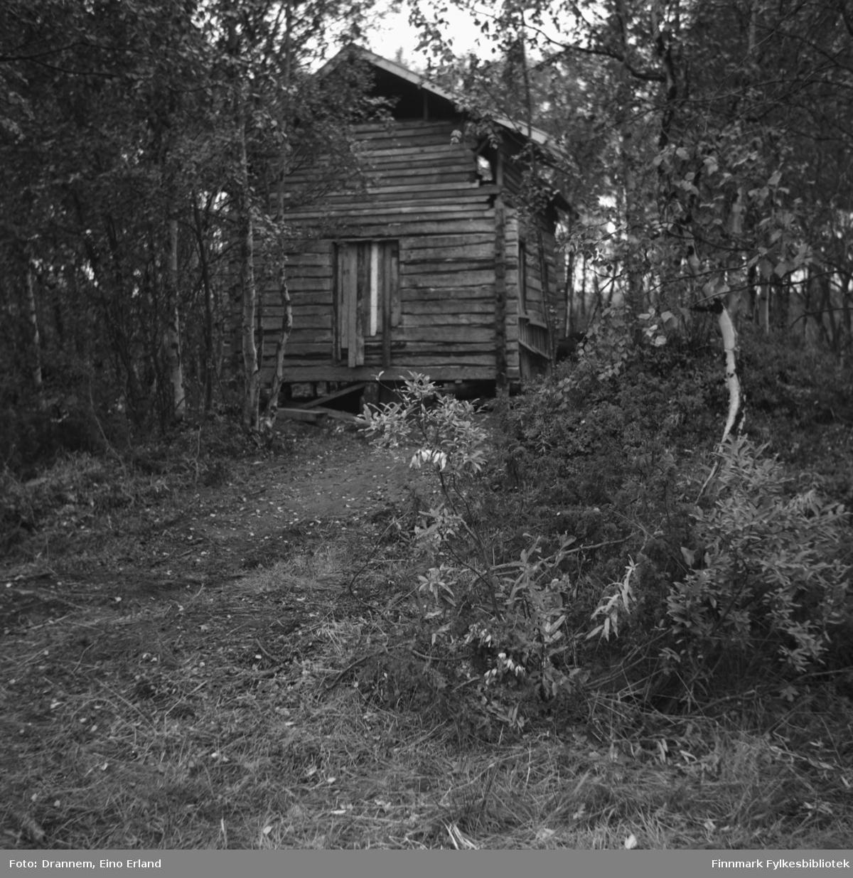 En hytte står i skogen i Neiden. Det kan være familien Drannems hytte.