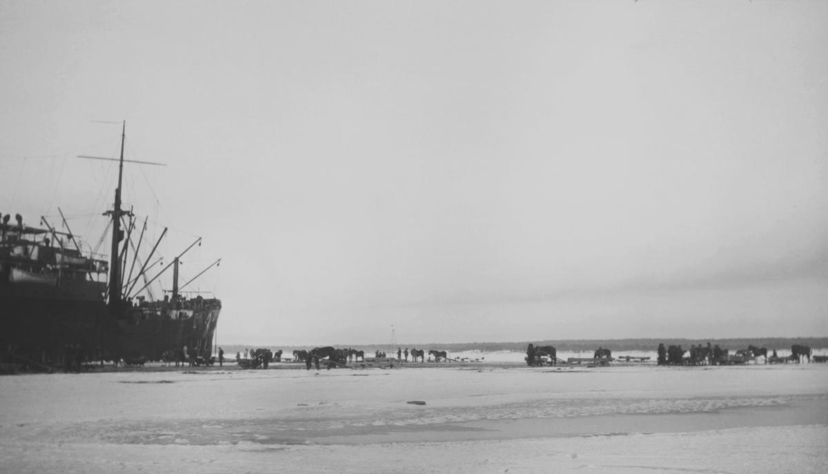 Tyskt transportfartyg i is vid Åland 1918; hästforor forslar materiel över isen