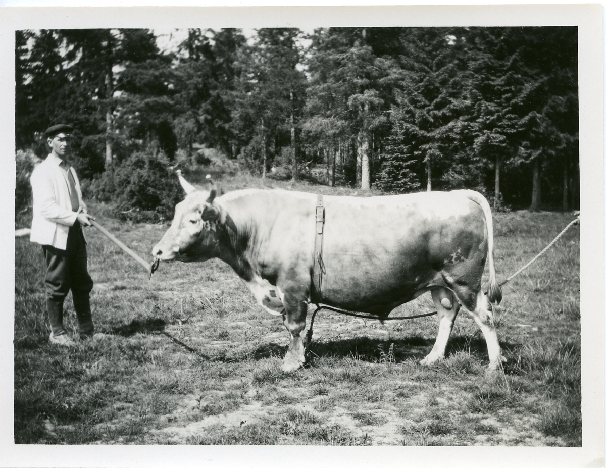(T. 300) Fløgutt frå Helgen Fealslag.
