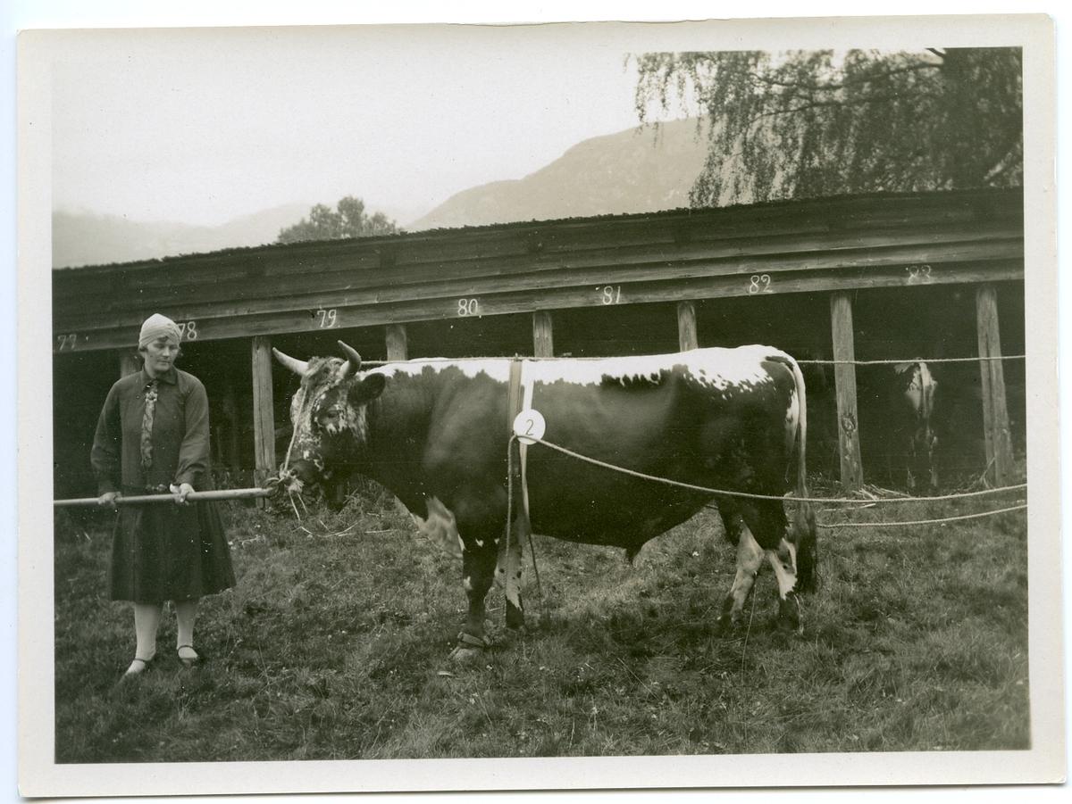(T. 317) Bjønn.