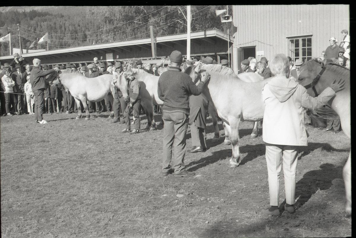 Mønstring av hest.