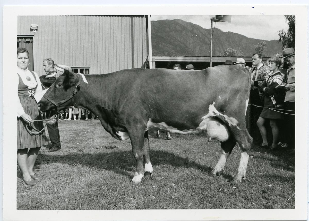 14 Sylva, f. 1967.
