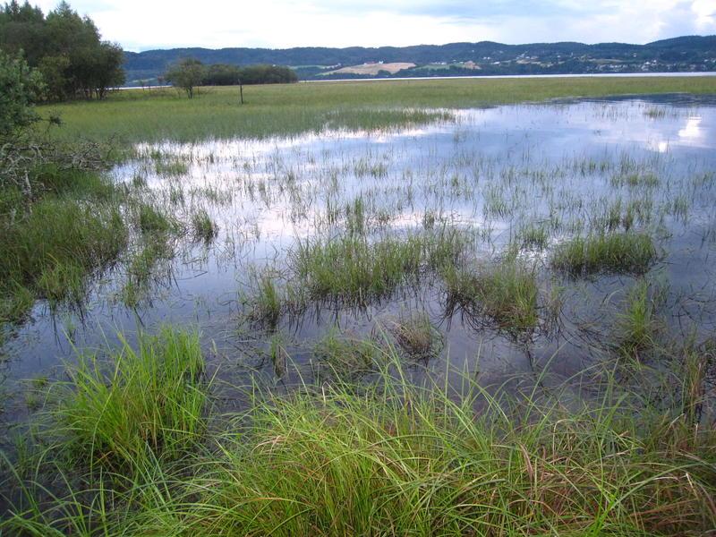 Foto av strandeng i Årnestangen (Foto/Photo)