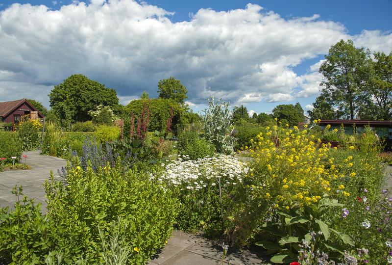 Blomsterbed med store planter med gule og hvite blomster. (Foto/Photo)