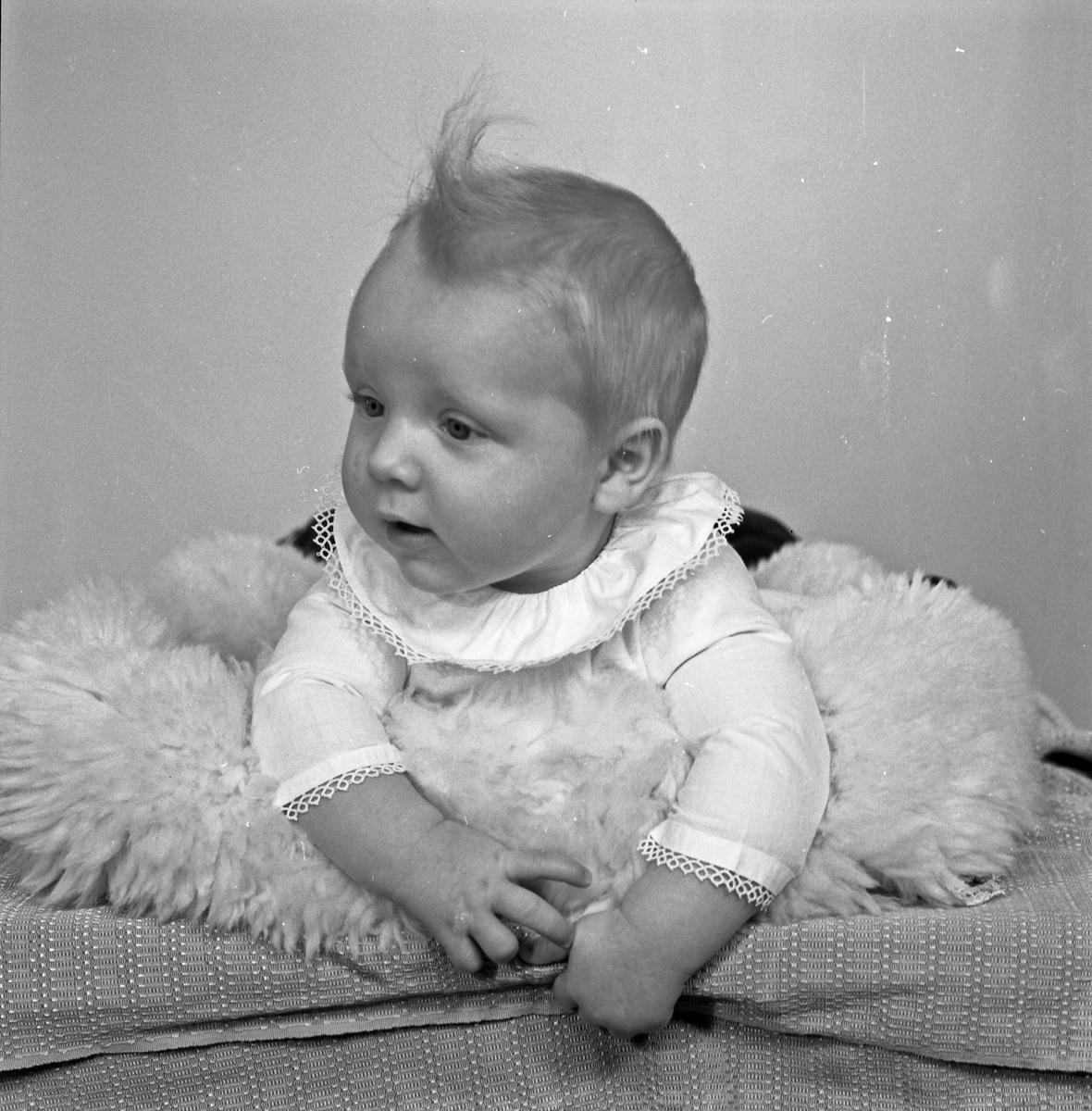 Portrett spebarn - bestiller Kåre Sandvik