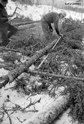 Skogsarbeider Ørsahl og tidsstudiemann Waagan i arbeid i noe