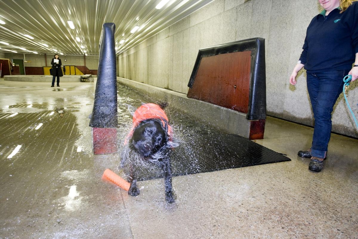 Svømme- og rehabiliteringssenter for hest. Hund er kommet opp etter svømmetur i svømmebasseng.