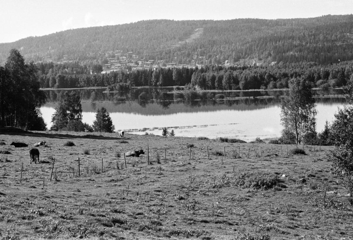 Bilder av Kjelle videregående skole og landskapet rundt