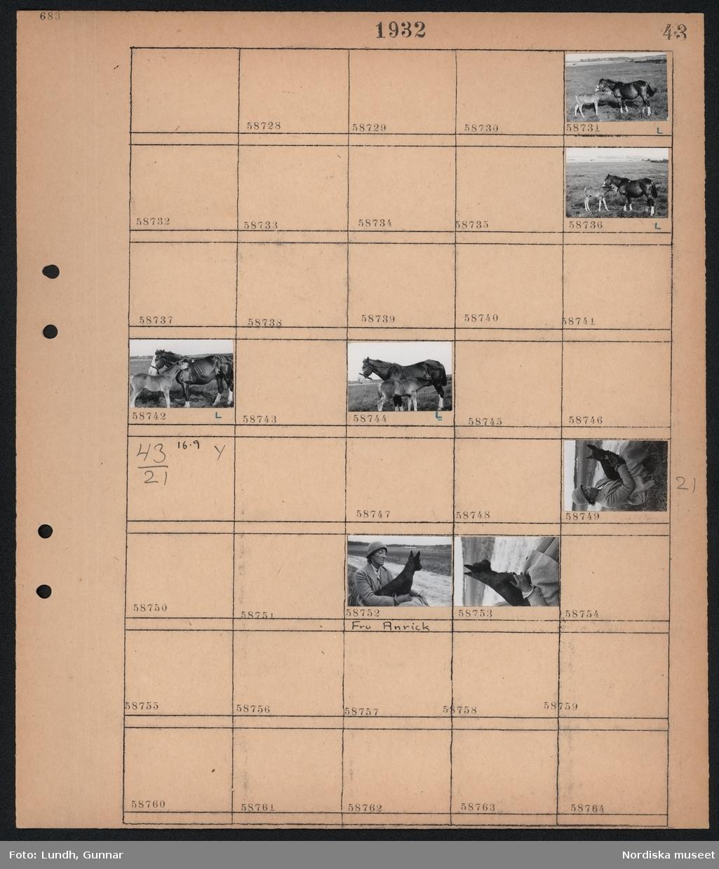 Motiv: (ingen anteckning) ; En häst och ett föl på en äng.  Motiv: (ingen anteckning) ; En kvinna håller en hund.