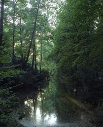 Tiergarten [Fotografi]
