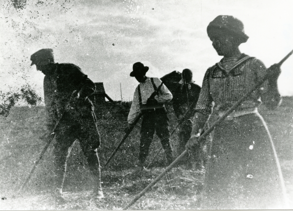 Kveldsstemning på åsslåtten i 1918.