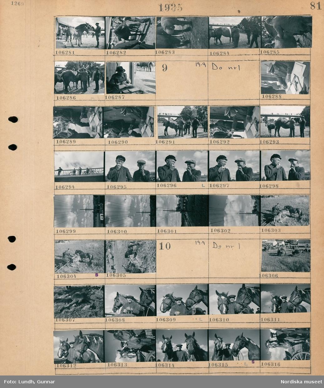 Motiv: Hästpremiering i Rimbo, Stambokföring; En man håller en häst, en man bedömer en häst, en man sitter vid ett bord och skriver en bok.  Motiv: Hästpremiering i Rimbo; En man sitter vid ett skrivbord, en grupp män står vid en häst, människor står på en bro, två pojkar äter äpple, en stolpe med telefonledningar, två män och två hästar vid en vagn.  Motiv: Hästpremiering i Rimbo; Människor och hästar på ett fält, en man håller två hästar.