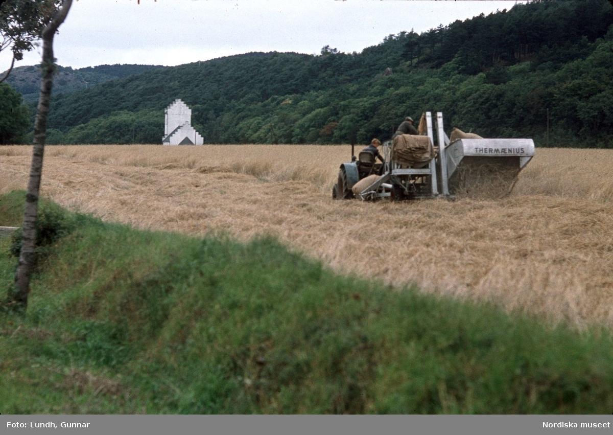Tröskningsarbete på fältet