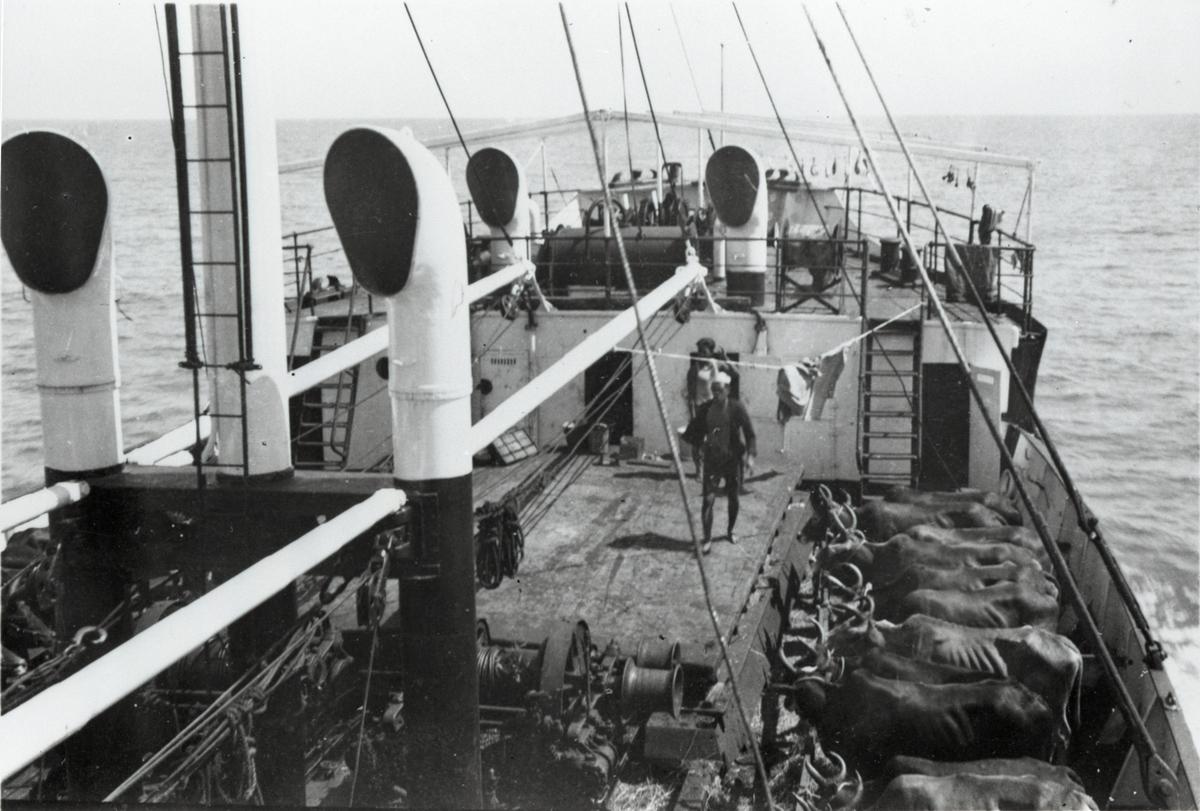 Vannbøfler ombord i D/S 'Hermod' (b.1925) på reise mellom Bangkok og Hong Kong