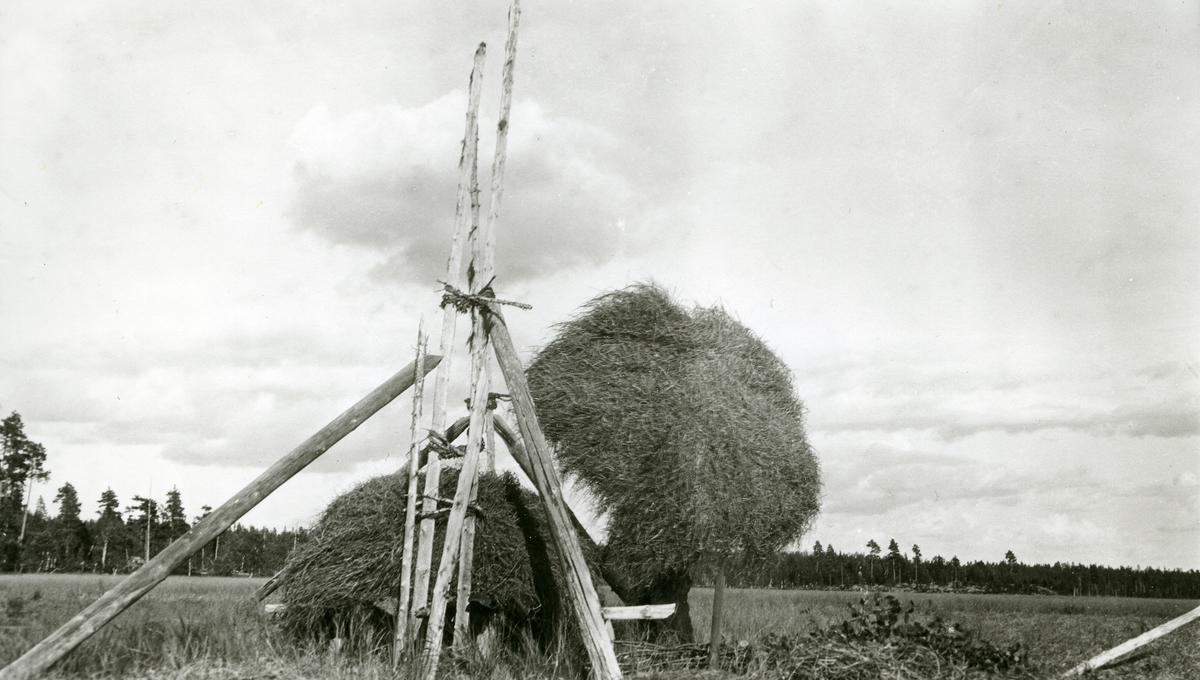 Vinterhesjing på Gravarkjølen øst for Galåsen. Lars Bjørkli (1868 - 1956)