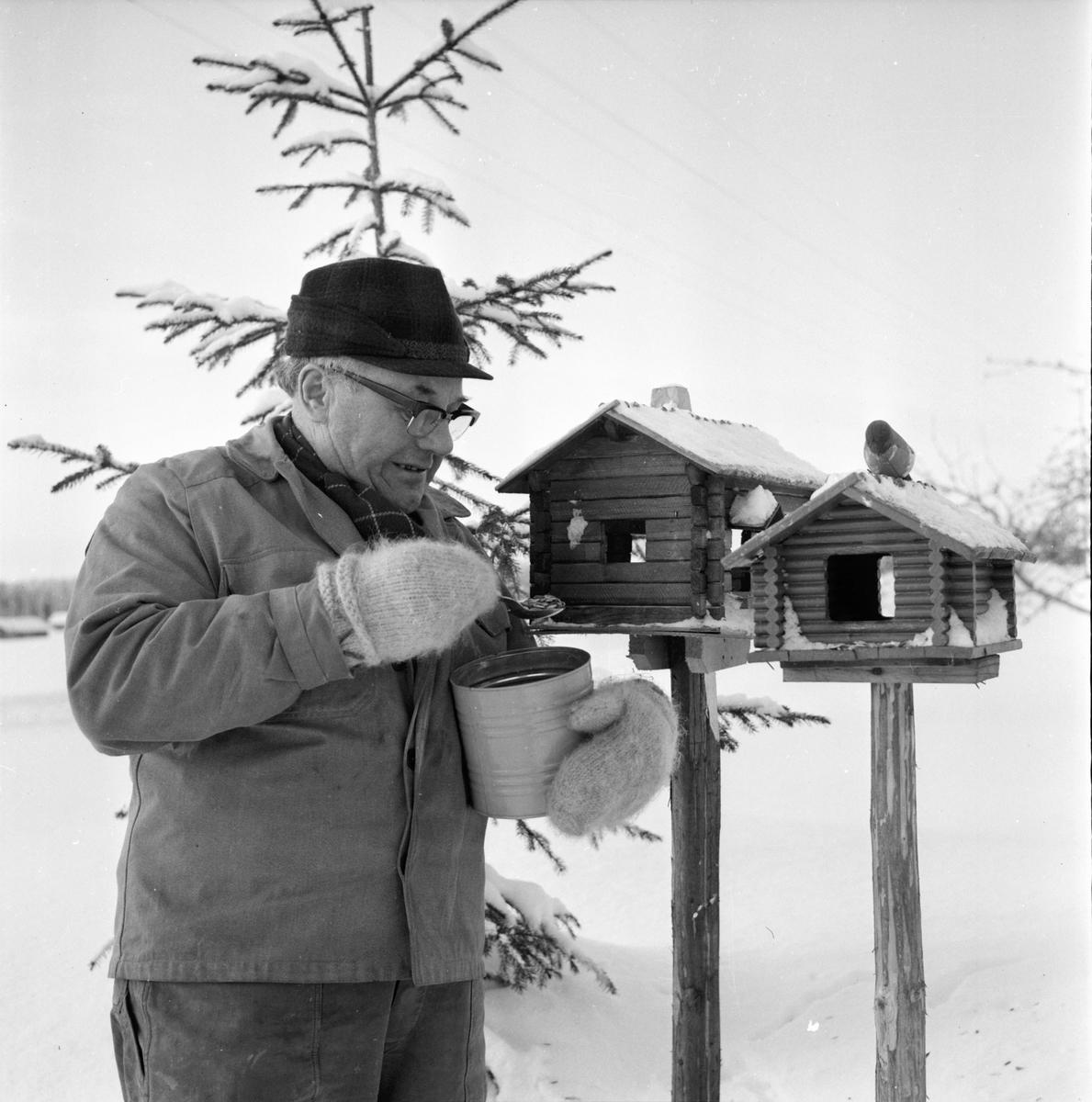 Rådjurshjälpen sjuk get. Växsjö Einar Bungs Röste 7/2-1966