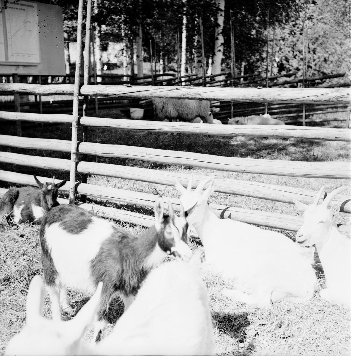 Arbrå, Jordbrukets dag på Nytorp, Juni 1971