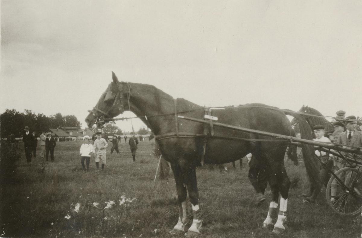 Travhäst med sulky bland barn.