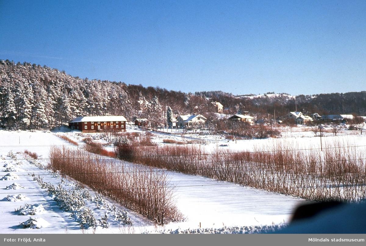 Vintervy över gården Rävekärr 1 i Mölndal. Karl Olhaus plantskola.