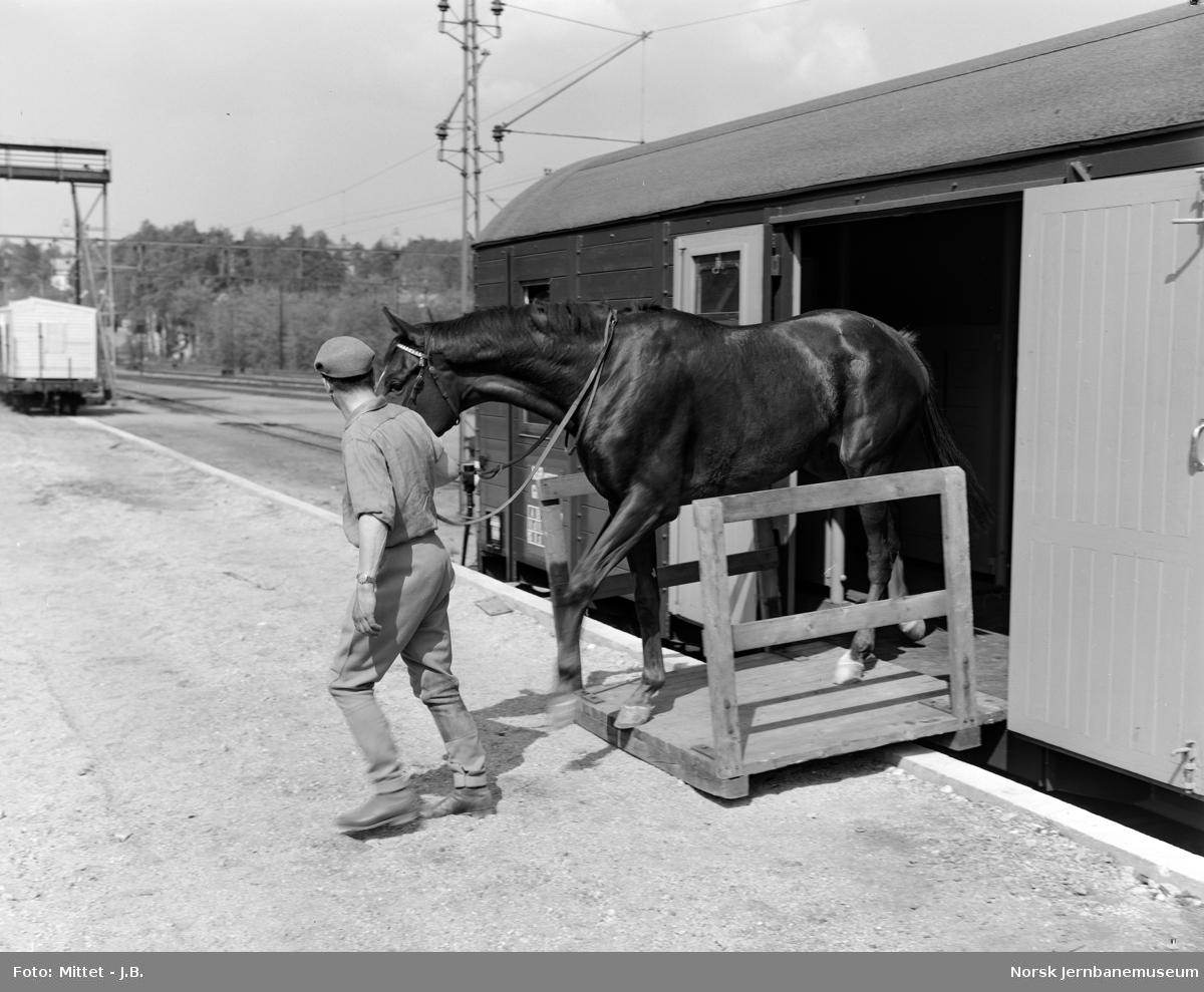 Ny hestevogn litra Gh4 nr. 1250, ombygget fra en tysk verkstedvogn NSB overtok