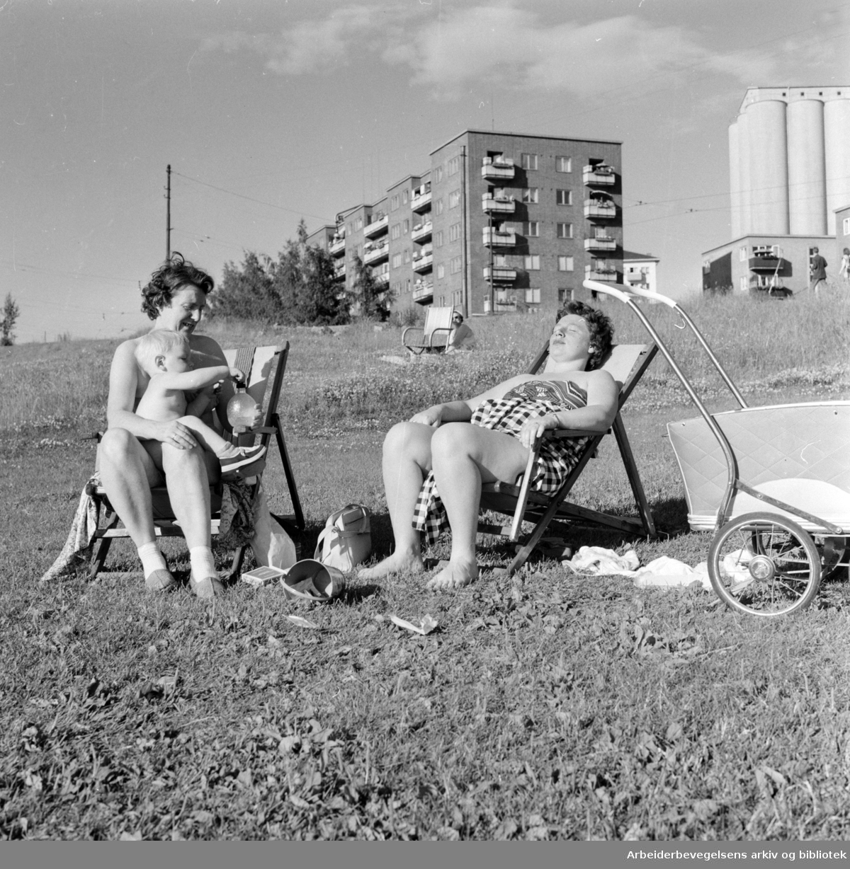 Torshovdalen park. Juli 1958