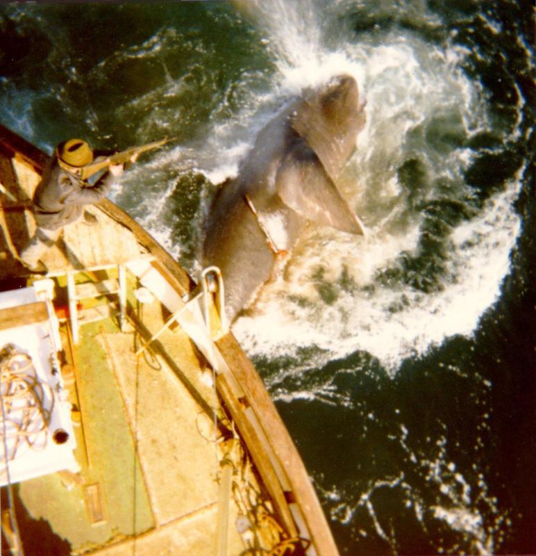 Brugdefiske på Vita. Foto Paul Torkelsen (Foto/Photo)