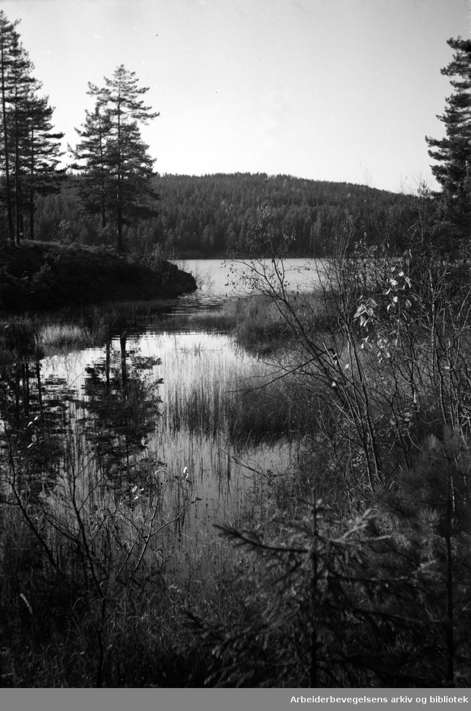 Nordmarka: Alunsjøen i Lillomarka. Oktober 1953