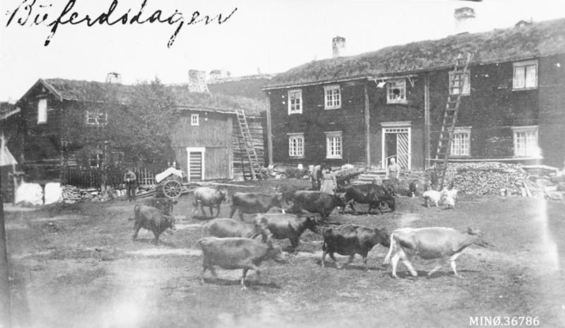 Seterflytting. Bildet er  tatt på buferdsdagen på gården Trøen i Dalsbygda.