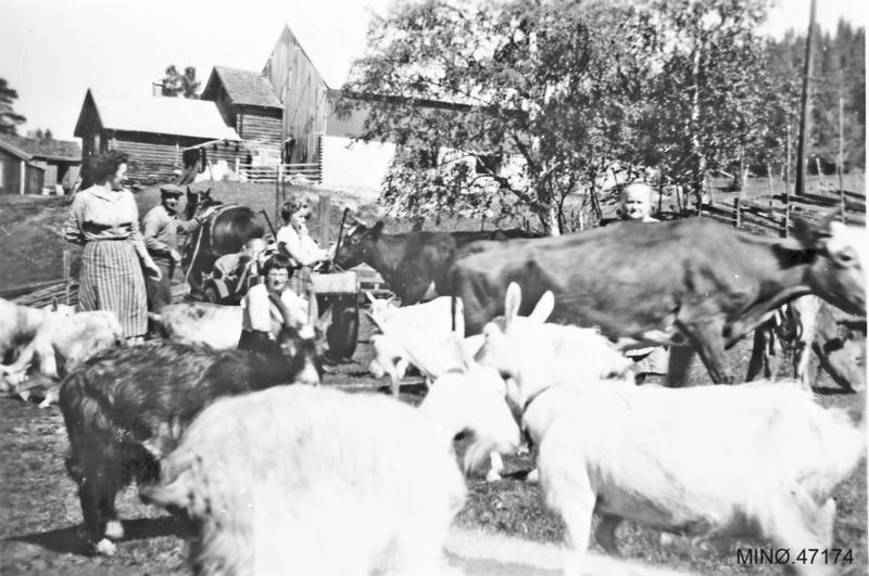 På flyttefot til setra. Lars Engetrøen kjører hest, Greta sitter på lasset, Gudrun og Tove Oddveig i dyreflokken. Ca. 1959.