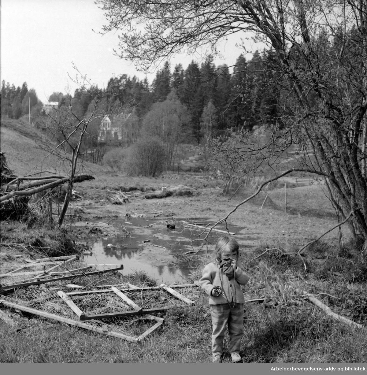 Ljanselva -fare for barna. Leirskallen. Mai 1956