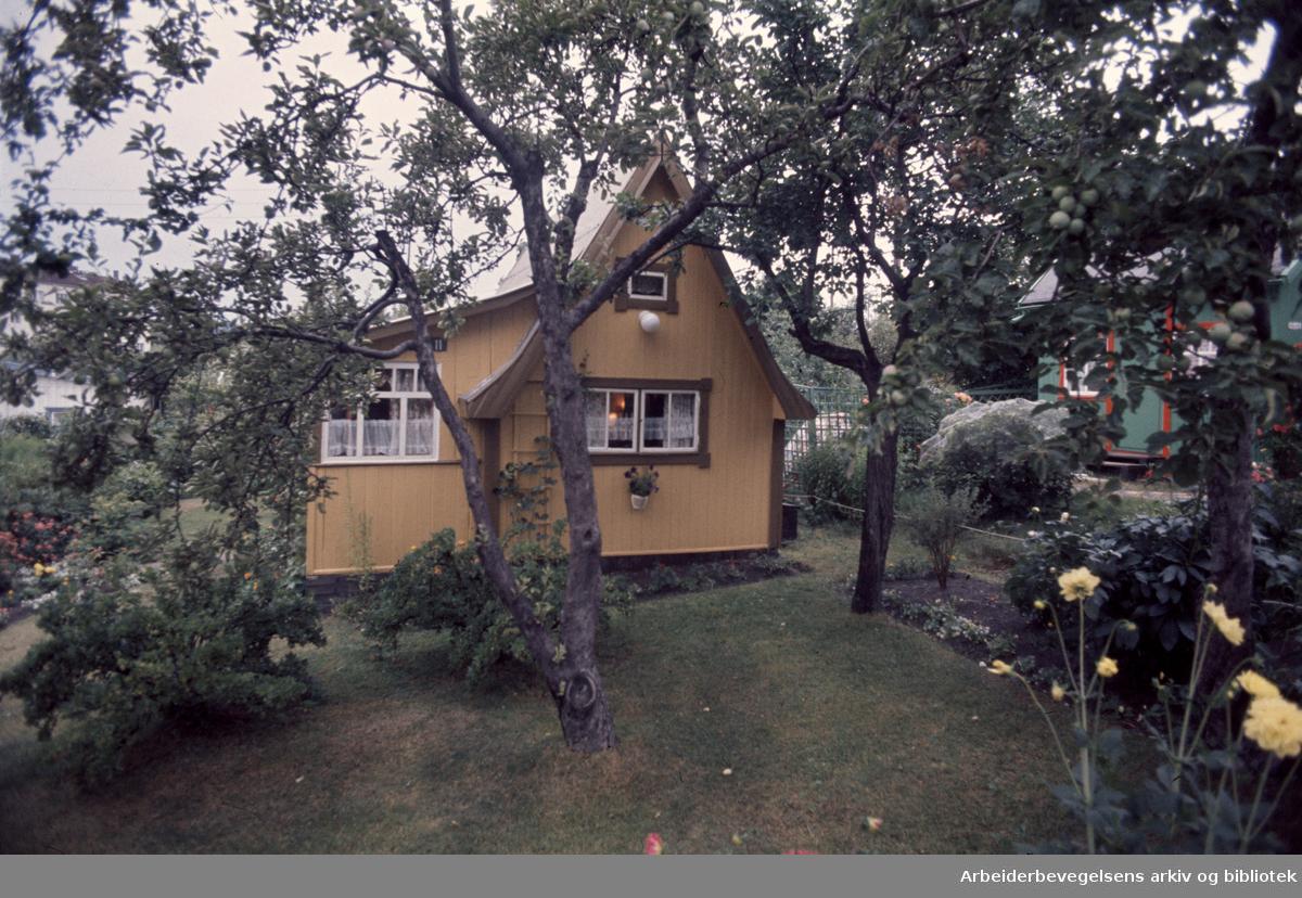 Hjemmets Kolonihage på Bjølsen. Juli 1976
